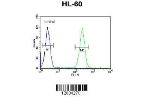 Image no. 1 for anti-BCL6 Corepressor-Like 1 (BCORL1) (AA 69-98), (N-Term) antibody (ABIN654801)