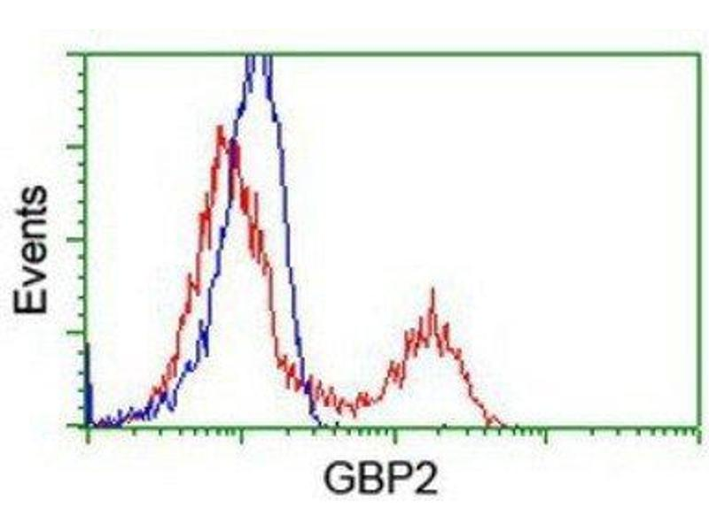 Flow Cytometry (FACS) image for anti-Guanylate Binding Protein 2, Interferon-Inducible (GBP2) antibody (ABIN4313701)