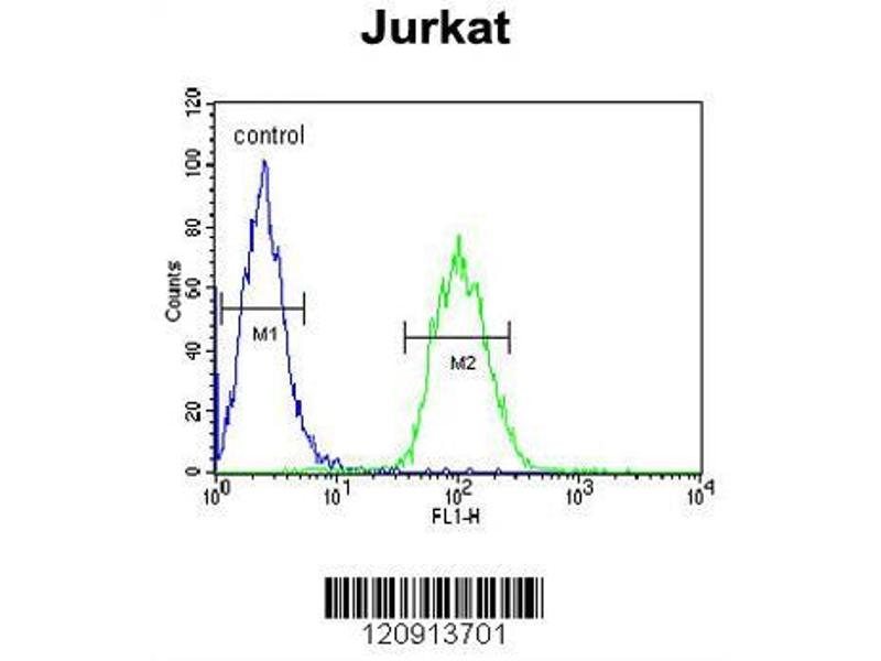 Flow Cytometry (FACS) image for anti-Aminolevulinate Dehydratase (ALAD) (AA 244-272), (C-Term) antibody (ABIN390809)