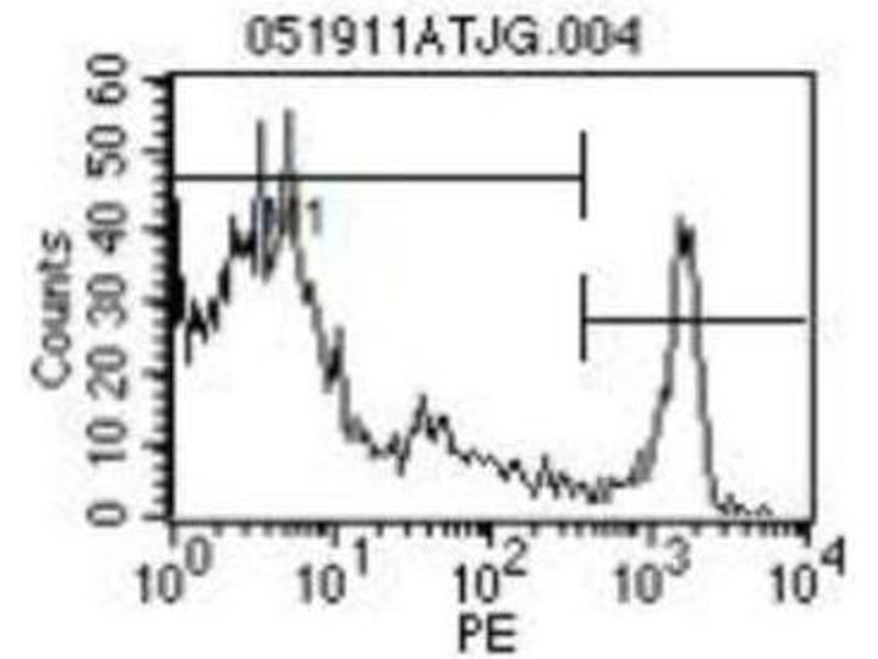 Flow Cytometry (FACS) image for anti-CD8a Molecule (CD8A) (Chain alpha) antibody (PE) (ABIN440296)