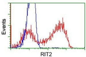 Flow Cytometry (FACS) image for anti-Ras-Like Without CAAX 2 (RIT2) antibody (ABIN4350619)