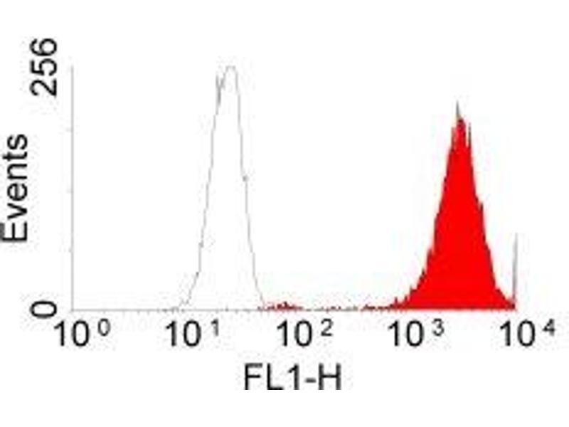 Flow Cytometry (FACS) image for anti-Epidermal Growth Factor Receptor (EGFR) antibody (ABIN153570)