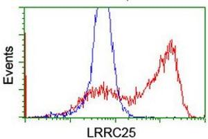 Image no. 3 for anti-Leucine Rich Repeat Containing 25 (LRRC25) antibody (ABIN1499199)