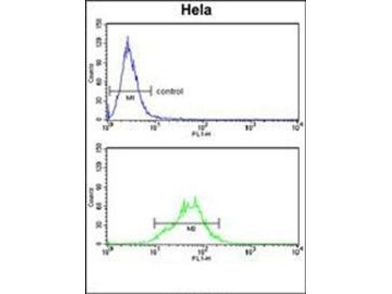 Flow Cytometry (FACS) image for anti-Lactate Dehydrogenase A antibody (LDHA) (AA 161-190) (ABIN953153)