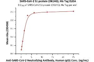 Image no. 4 for SARS-CoV-2 Spike S1 (Asp614Gly-Mutant) protein (His tag) (ABIN6953175)