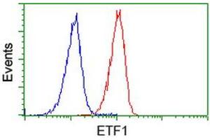 Image no. 3 for anti-Eukaryotic Translation Termination Factor 1 (ETF1) antibody (ABIN1498129)