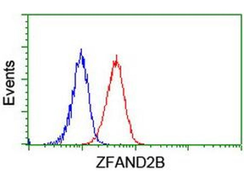 Image no. 4 for anti-Zinc Finger, AN1-Type Domain 2B (ZFAND2B) antibody (ABIN1501807)