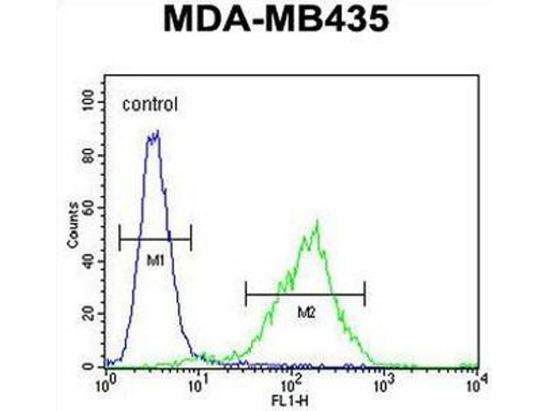 Flow Cytometry (FACS) image for anti-C11orf73 antibody (Chromosome 11 Open Reading Frame 73) (AA 9-39) (ABIN950728)