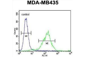 Image no. 1 for anti-Chromosome 11 Open Reading Frame 73 (C11orf73) (AA 9-39), (N-Term) antibody (ABIN950728)
