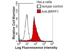 Image no. 1 for anti-Bromodomain and PHD Finger Containing, 1 (BRPF1) antibody (ABIN933002)