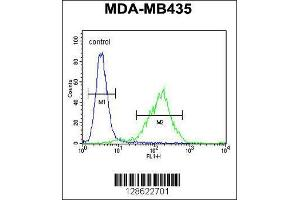 Image no. 4 for anti-Chromosome 11 Open Reading Frame 73 (C11orf73) (AA 6-35), (N-Term) antibody (ABIN654735)