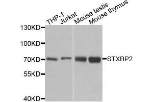 Western Blotting (WB) image for anti-Syntaxin Binding Protein 2 (STXBP2) antibody (ABIN2737618)