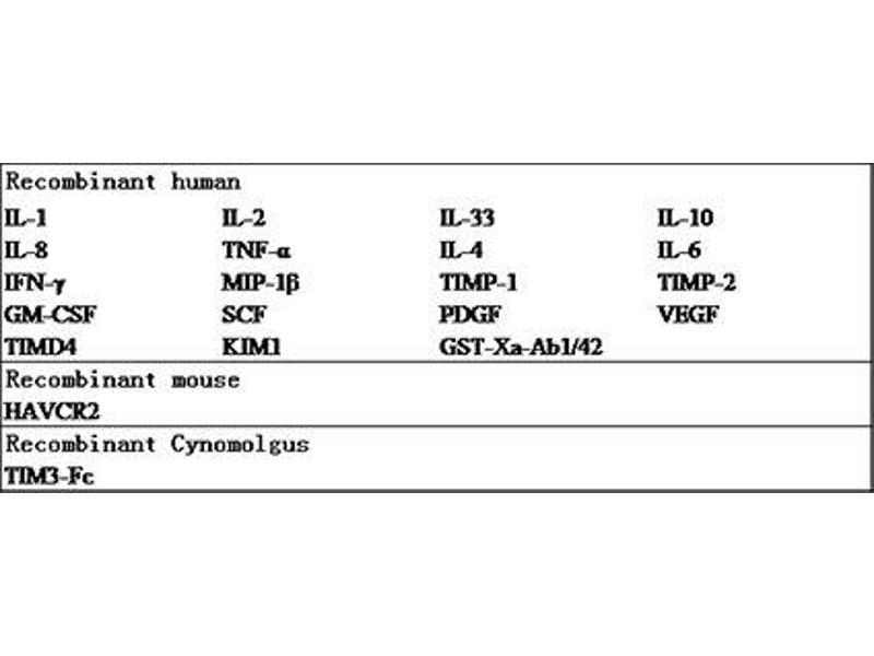 Hepatitis A Virus Cellular Receptor 2 (HAVCR2) ELISA Kit (2)