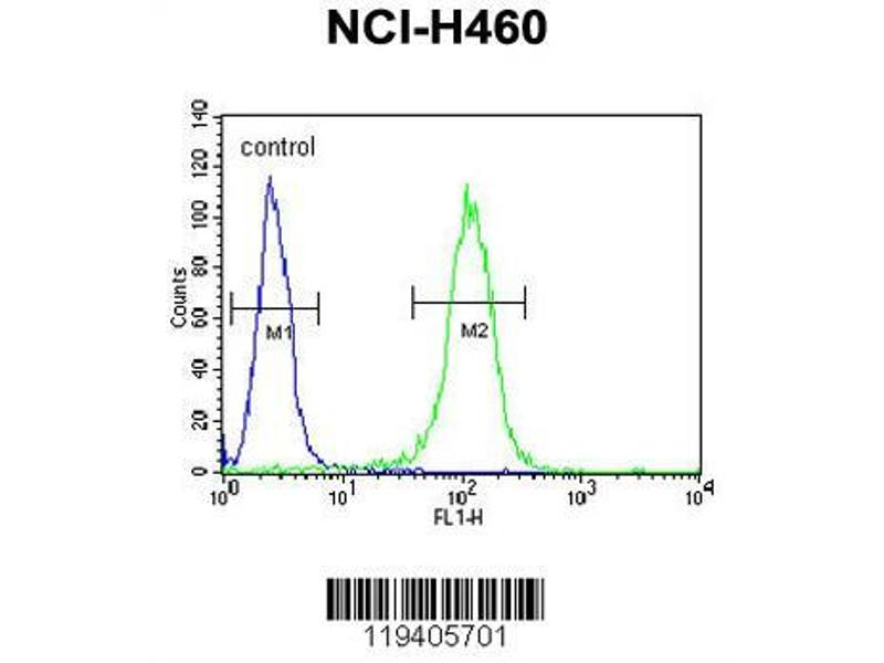 Flow Cytometry (FACS) image for anti-Class B Basic Helix-Loop-Helix Protein 3 (BHLH3) (AA 17-46), (N-Term) antibody (ABIN651934)