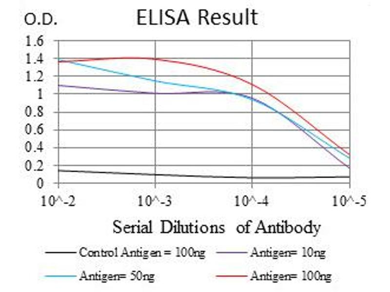 ELISA image for anti-RPS6KA3 antibody (Ribosomal Protein S6 Kinase, 90kDa, Polypeptide 3) (ABIN1108903)