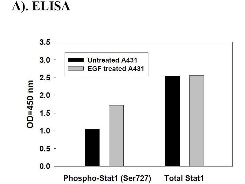 image for STAT1 ELISA Kit (Signal Transducer and Activator of Transcription 1, 91kDa) (ABIN625243)