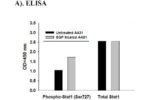 Image no. 7 for Signal Transducer and Activator of Transcription 1, 91kDa (STAT1) ELISA Kit (ABIN625243)