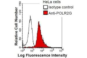 Image no. 1 for anti-Polymerase (RNA) II (DNA Directed) Polypeptide G (POLR2G) antibody (ABIN933124)