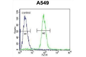 Image no. 2 for anti-SRY (Sex Determining Region Y)-Box 3 (SOX3) antibody (ABIN2996519)