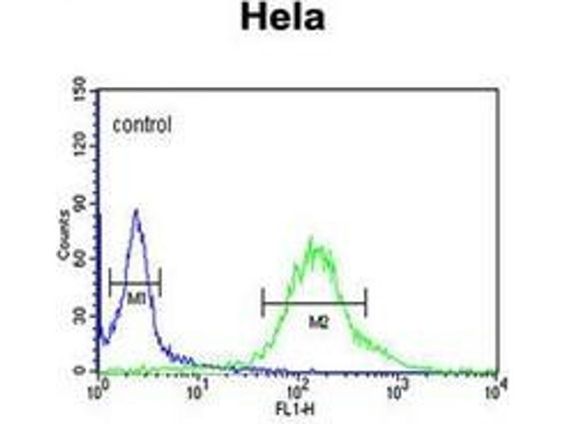 Flow Cytometry (FACS) image for anti-G-2 and S-Phase Expressed 1 (GTSE1) (AA 691-720), (C-Term) antibody (ABIN952659)
