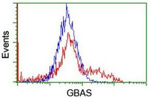 Image no. 2 for anti-Glioblastoma Amplified Sequence (GBAS) antibody (ABIN1498394)