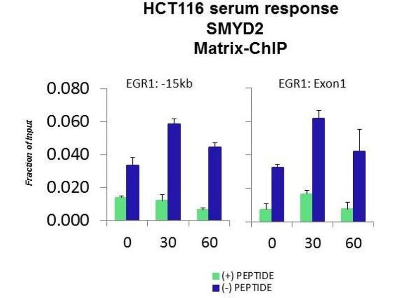Chromatin Immunoprecipitation (ChiP) image for anti-SET and MYND Domain Containing 2 (SMYD2) (Middle Region) antibody (ABIN503176)