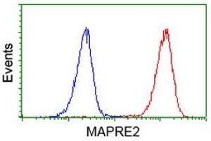 Image no. 5 for anti-Microtubule-Associated Protein, RP/EB Family, Member 2 (MAPRE2) antibody (ABIN1499321)