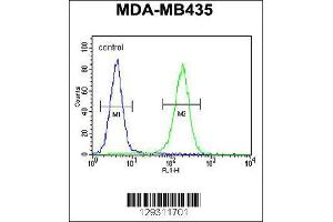 Image no. 2 for anti-Tubulin Tyrosine Ligase-Like Family, Member 13 (TTLL13) (AA 461-490), (Center) antibody (ABIN655432)