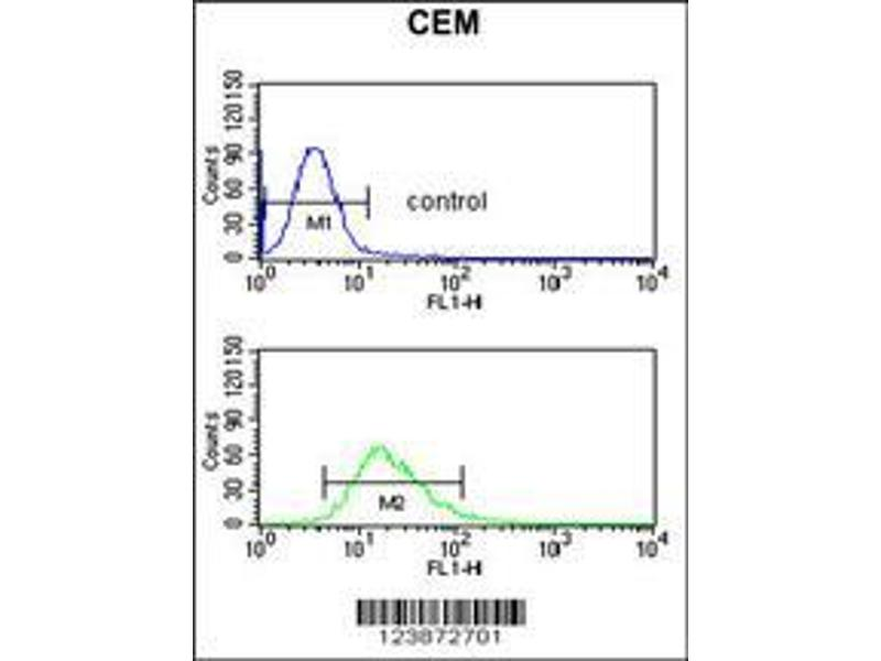 Flow Cytometry (FACS) image for anti-DMC1 Dosage Suppressor of Mck1 Homolog, Meiosis-Specific Homologous Recombination (Yeast) (DMC1) (AA 1-30), (N-Term) antibody (ABIN653277)