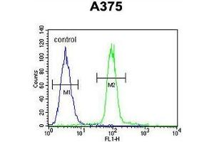 Image no. 1 for anti-APOBEC1 Complementation Factor (A1CF) (AA 397-427), (C-Term) antibody (ABIN950458)