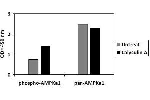 Image no. 2 for Protein Kinase, AMP-Activated, alpha 1 Catalytic Subunit (PRKAA1) ELISA Kit (ABIN5526721)