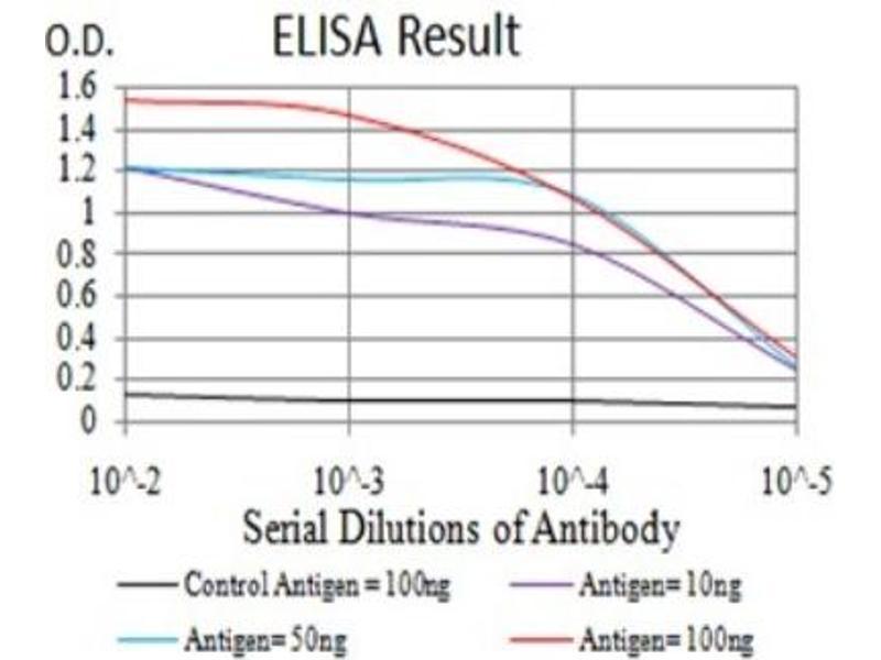 ELISA image for anti-V-Ral Simian Leukemia Viral Oncogene Homolog B (Ras Related, GTP Binding Protein) (Ralb) (AA 89-206) antibody (ABIN5683837)
