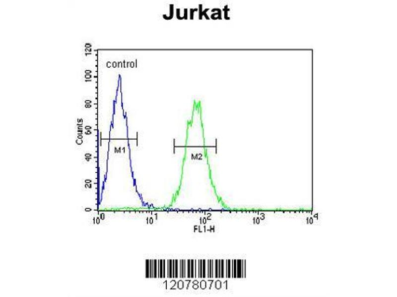 Flow Cytometry (FACS) image for anti-Protein tyrosine Phosphatase, Non-Receptor Type 11 (PTPN11) (AA 520-547), (C-Term) antibody (ABIN390840)