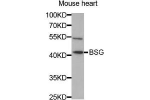 Image no. 4 for anti-Basigin (Ok Blood Group) (BSG) antibody (ABIN1512647)
