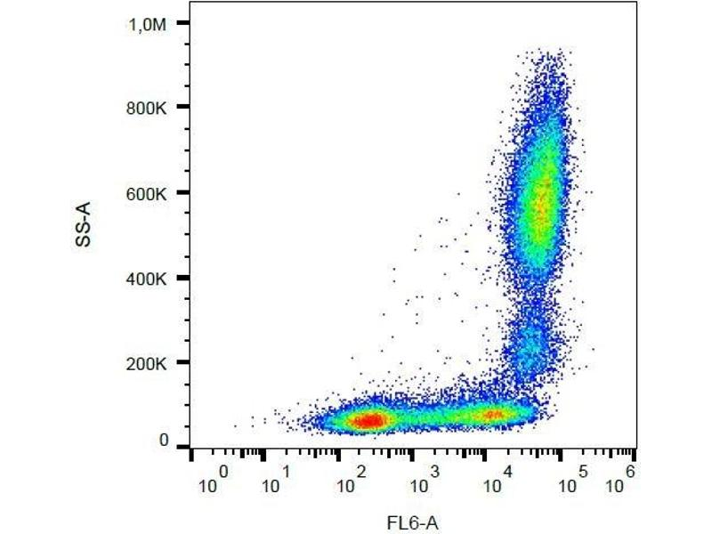 Flow Cytometry (FACS) image for anti-Integrin alpha M (ITGAM) antibody (APC) (ABIN1302538)