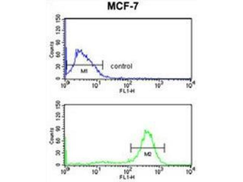 Flow Cytometry (FACS) image for anti-Chondroitin Polymerizing Factor (CHPF) (Middle Region) antibody (ABIN951509)