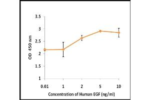 Image no. 1 for Epidermal Growth Factor (EGF) (Active) protein (ABIN5509294)