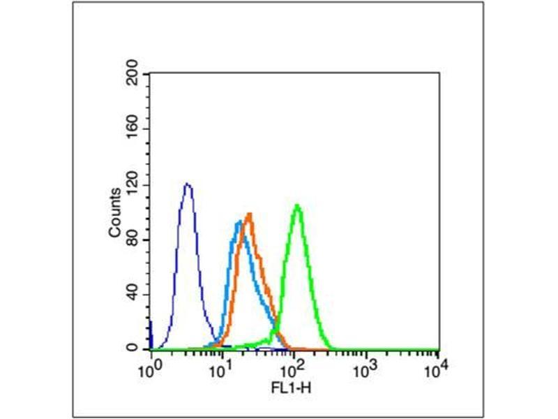 image for anti-Sirtuin 1 (SIRT1) (AA 192-242) antibody (ABIN729853)