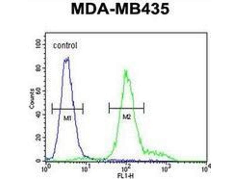 Flow Cytometry (FACS) image for anti-IL12RB2 antibody (Interleukin 12 Receptor, beta 2) (AA 759-788) (ABIN952881)