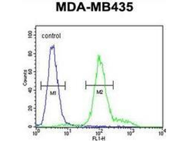 Flow Cytometry (FACS) image for anti-Interleukin 12 Receptor, beta 2 (IL12RB2) (AA 759-788), (C-Term) antibody (ABIN952881)