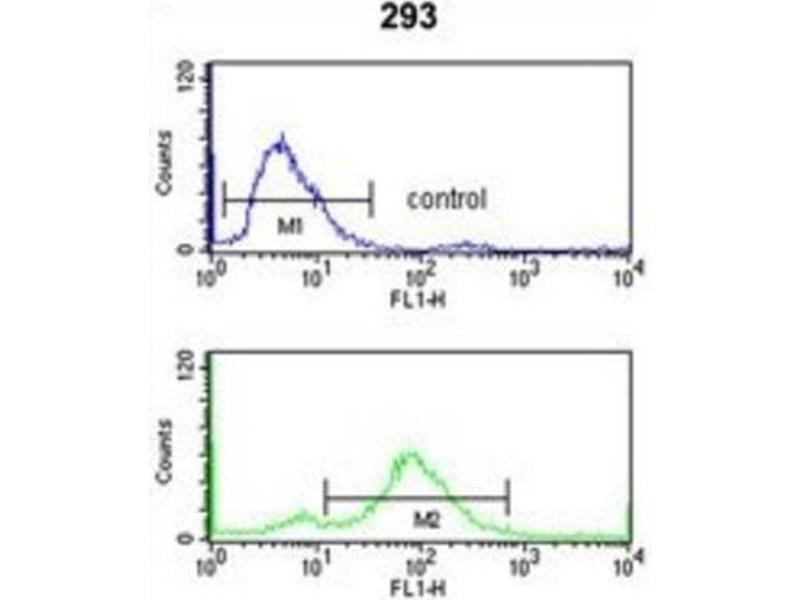 Flow Cytometry (FACS) image for anti-Transportin 1 (TNPO1) antibody (ABIN3000887)