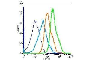 Image no. 1 for anti-Gastric Inhibitory Polypeptide Receptor (GIPR) antibody (ABIN1714376)
