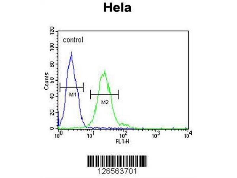 Flow Cytometry (FACS) image for anti-tRNA Methyltransferase 11 Homolog (S. Cerevisiae) (Trmt11) (AA 303-332), (C-Term) antibody (ABIN651583)