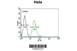 anti-tRNA Methyltransferase 11 Homolog (S. Cerevisiae) (Trmt11) (AA 303-332), (C-Term) antibody (2)