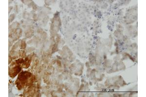 Image no. 1 for anti-Growth Differentiation Factor 11 (GDF11) (AA 310-407) antibody (ABIN523622)
