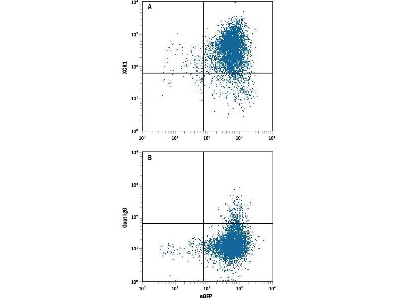 Flow Cytometry (FACS) image for anti-Chemokine (C Motif) Receptor 1 (XCR1) (AA 1-31), (AA 168-190), (AA 251-267), (AA 89-103) antibody (PE) (ABIN4897816)