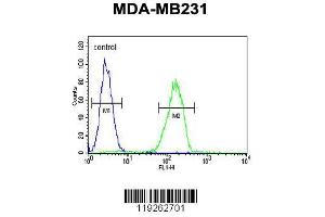 Image no. 1 for anti-Cathepsin S (CTSS) (AA 210-240), (Center) antibody (ABIN391571)