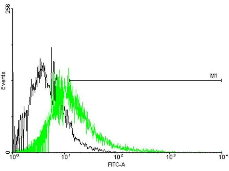 Flow Cytometry (FACS) image for anti-Calcium Channel, Voltage-Dependent, gamma Subunit 1 (CACNG1) (AA 1-222), (full length) antibody (ABIN513943)