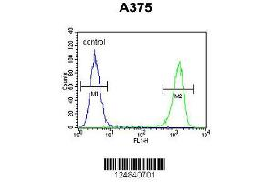 Image no. 2 for anti-Family with Sequence Similarity 96, Member B (FAM96B) (AA 16-45), (N-Term) antibody (ABIN653317)