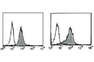 Flow Cytometry (FACS) image for anti-BCL2 antibody (B-Cell CLL/lymphoma 2)  (PE) (ABIN1105508)